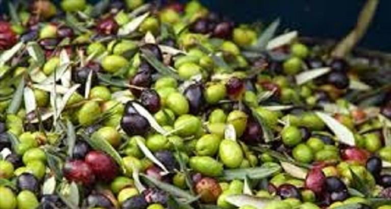 olive_6
